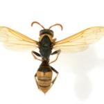 1-wasp2
