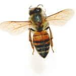 4-bee1_8
