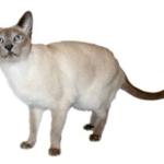 4-cat