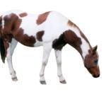 4-horsephoto_8