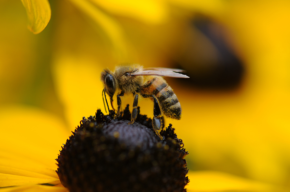 Bee and wasp allergy