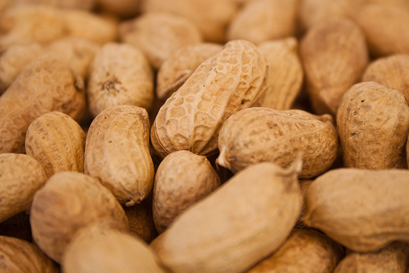 AFSA Living-with-peanut-allergy-and-Oral-Immunotherapy-