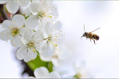 AFSA-Pollen-Updates